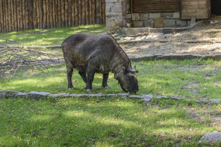 Zoo Wrocław (1)